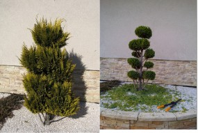 Formowanie i przycinanie drzew i krzewów