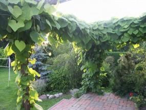 zakładanie i renowacja ogrodów
