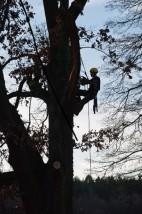 wycinka drzew techniką alpinistyczną