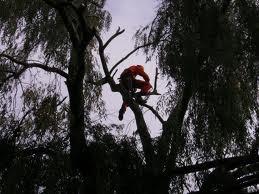wycinanie, przycinanie drew alpinistycznie