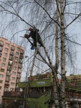 przycinka pielęgnacyjna drzew