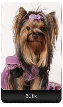 fryzjer dla psów