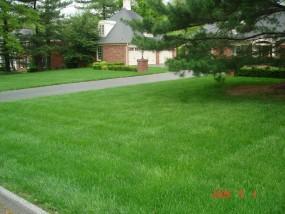 Zakładanie trawników z siewu i rolki
