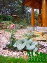 >>> OGRÓD - rabaty kwiatowe - trawy ozdobne - skalniaki - ogrody wodn
