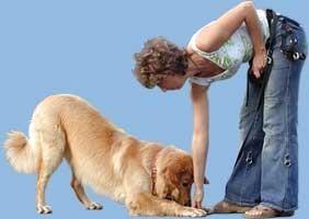 Pozytywne Szkolenie Psów, Psie przedszkole i Szkoła dla Psów ALTERI