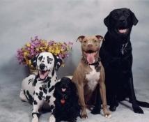 strzyżenie psów