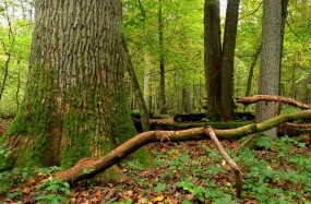 Wakacje agroturystyczne w Puszczy Białowieskiej