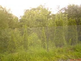 wycinka drzew Bielsko, Czechowice, Kozy