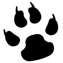 Szczepienia profilaktyczne zwierząt