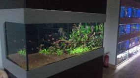 Profesjonalne serwisowanie akwariów