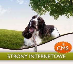 Strony internetowe z CMS
