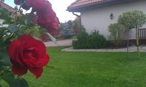 Usługi ogrodnicze / pielęgnacyjne Konstancin