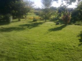Zwalczanie mchu i chwastów w trawniku