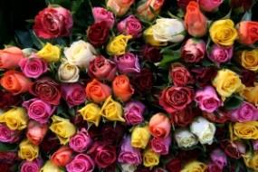 Kwiaciarnia Hałcnów