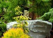 Hurtownia roślin, krzewów, bylin