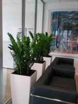 Rośliny doniczkowe żywe oraz kwiaty sztuczne.