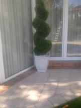 Prześwietlanie i formowanie drzew i krzewów