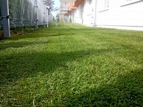 Zakładanie trawników z siewu oraz rolowanych