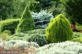 Projektowanie i zakładanie ogrodów