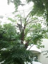 Wycinka drzew Izabelin