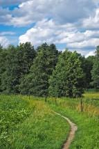 Czyszczenie upraw leśnych