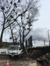 Wycinanie i przycinanie drzew