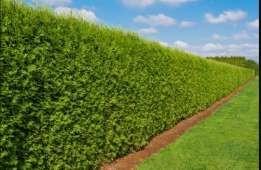 przycinanie i formowanie drzew i krzewów