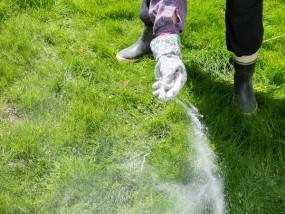 Nawożenie trawników