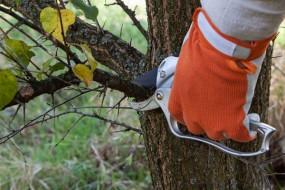 Przycinanie drzew i krzewów