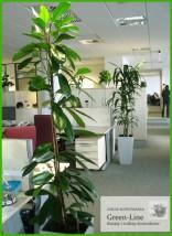 Opieka nad roślinami doniczkowymi
