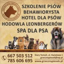 behawiorysta ,zoopsycholog ,szkolenie psów