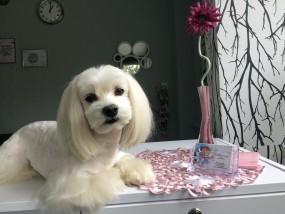 Strzyżenie i pielęgnacja psów