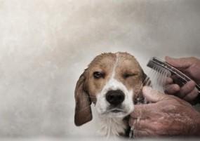 Kąpiele psów