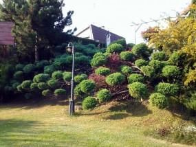 Pielęgnacja ogrodów i trawników