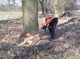 Wycinka- ścinanie i formowanie drzew -Pilarz
