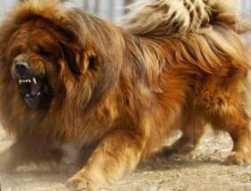 Resocjalizacja niesfornych psów