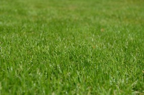 Koszenie i pielęgnacja trawników