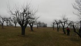 Przycinanie drzew i żywopłotów