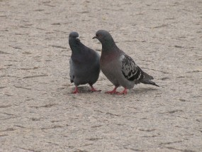 Montaż siatek zabezpieczających przed ptakami