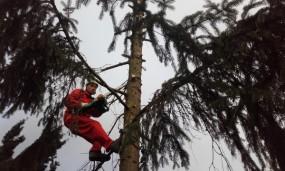 Wycinka drzew metodą alpnistyczną