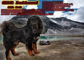Reproduktor - Mastif Tybetański