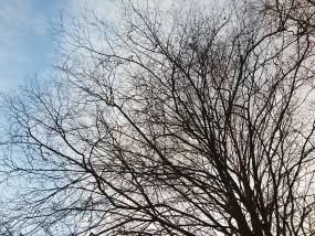 Przycinanie gałęzi drzew