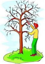 Formowanie drzew i krzewów ozdobnych