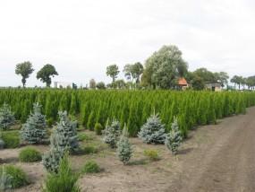 Sprzedaż drzew i krzewów ozdobnych