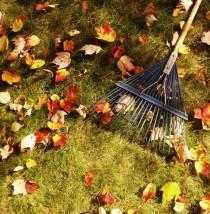 Usługi porządkowe grabienie liści