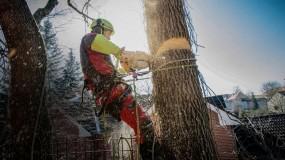 Arborystyka - Przycinanie Drzew