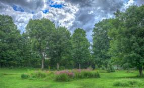 Wycinka drzew i krzewów