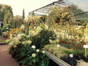 Ogród Rośliny Kwiaty Trawy Byliny Drzewa