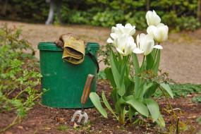 Zakładanie i urządzanie ogrodów