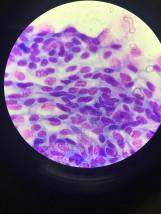Dermatologia i Cytologia